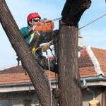 Отрязване на опасни дървета
