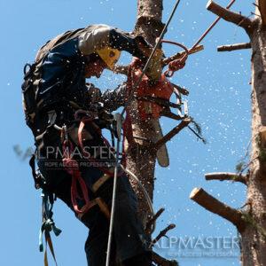 Тервел Тотев реже дърво по метода на въжения достъп